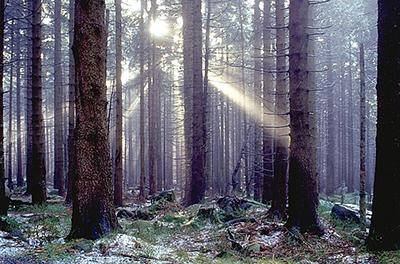 El bosque - Imagen de Andreas Tille CC-BY-SA 4.0