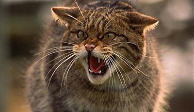 Gato callejero - Imagen de Pinterest de wakyma.com